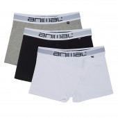 Asta 3 pack boxer